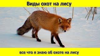 Какие бывают виды охот на лису и что я о них знаю