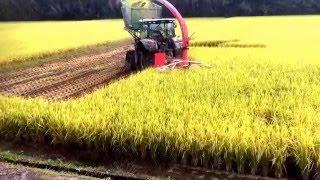 JOHNDEERE6150+C2200 飼料稲刈り取り  枕地処理