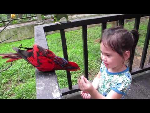 KL BIRD PARK | On Location