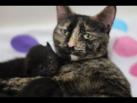 The incredible story of a mother cat's love
