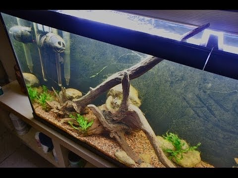 Infamous New World Planted Cichlid Tank Nualgi Aquarium Review How to Clear Fish Water
