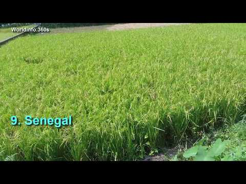 Top 10 Rice Importing Countries - YouTube