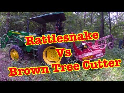 HUGE RATTLESNAKE vs. THE BROWN TREE CUTTER