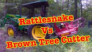 HUGE RATTLESNAKE vs. THE BROWN TREE CUTTER 😲😲😲
