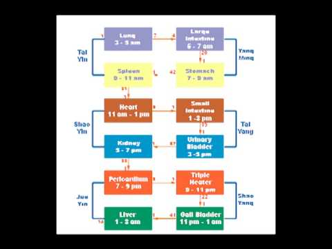 Energy Anatomy  Meridians