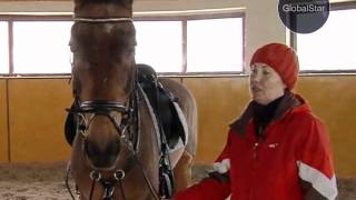 GLOBAL STAR TV P.R.O.HORSE #26 АХАЛТЕКИНСКАЯ ПОРОДА