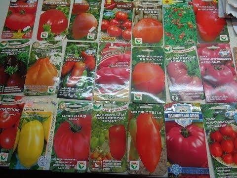 Ольга чернова бийск показать видео обзор томатов