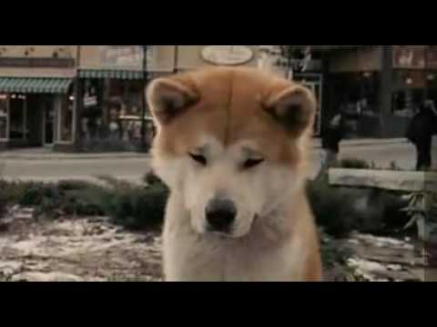 Hachi A Dog S Tale Free