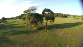 Cutting the tree and nearly cut my hair with my drone