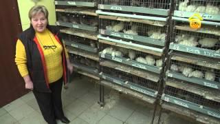 Устройство перепелятника. Личный опыт // FORUMHOUSE(Когда перепелов немного, содержать их можно и в самом ограниченном пространстве: на кухне, на балконе, в..., 2012-12-11T12:21:03.000Z)
