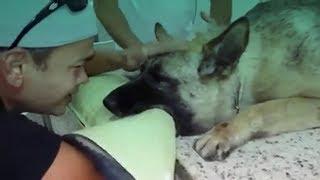 Ultima Despedida do Cão e seu Dono (Tente não chorar)