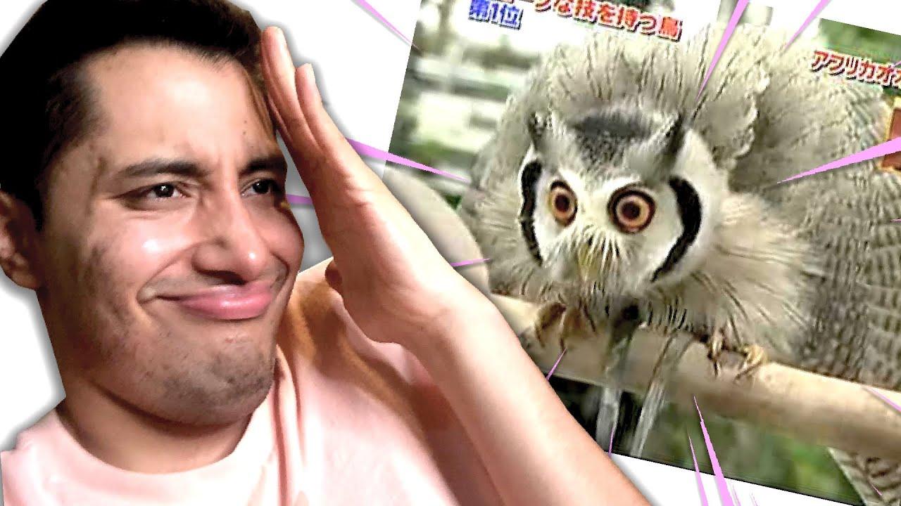 videos MUY CURIOSOS de ANIMALES 👀