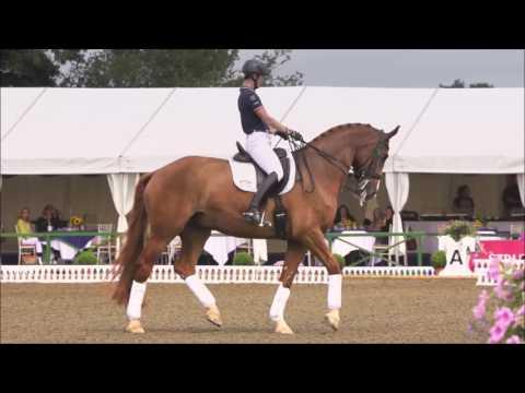 Horse Riding | Battle Scars