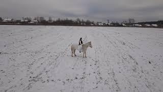 White Horse. Съемка с квадрокоптера лошади
