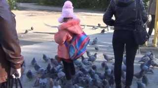 лесосибирск улица белинского автобусная остановка девочка с голубем