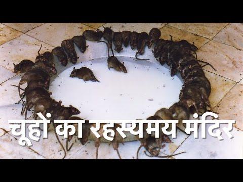 Karni Mata Temple - Temple of Rats || करनी माता मंदिर || भारत का रहस्यमय मंदिर