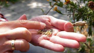 http://tv.ucoz.pl/dir/ogrodnictwo/sierpien_w_ogrodzie_kalendarz_ogrodnika_na_24_08_30_08_prace_ogrodnicze_w_sierpniu/4-1-0-254