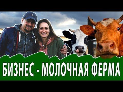 Производство молочной продукции. Молочная ферма
