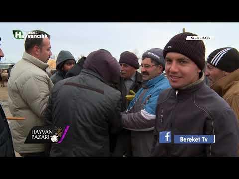 Hayvan Pazarı - Kars / Selim