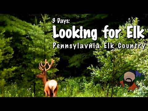 3 Days: Looking for Elk - Pennsylvania Elk Country