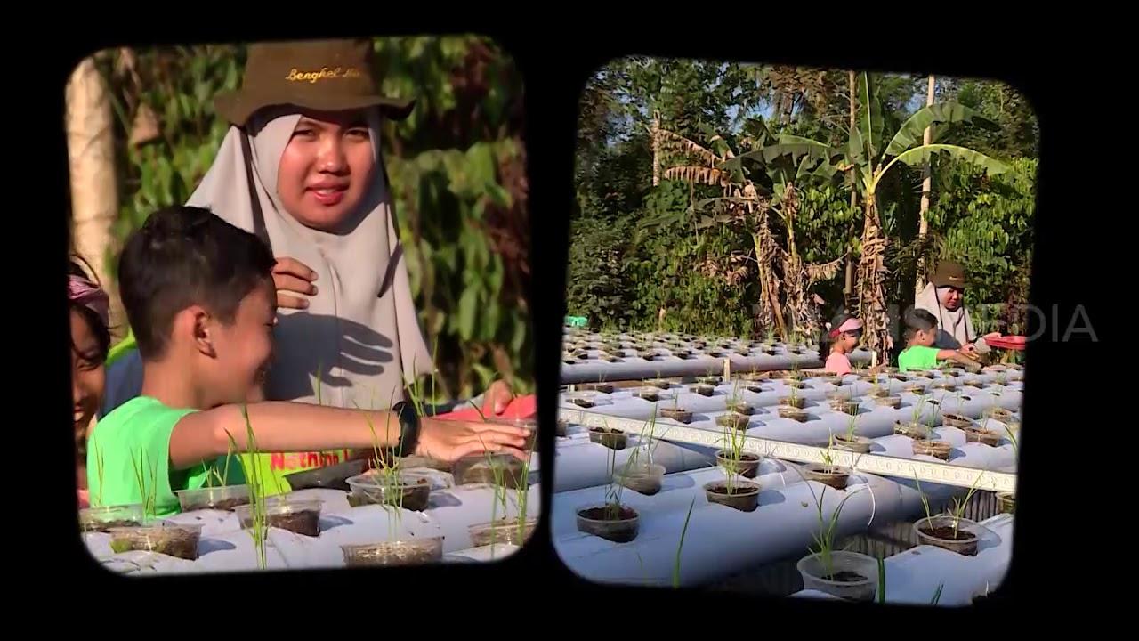 Budidaya Padi Hidroponik Hemat Lahan Banget | SI UNYIL (01/07/20) PART 3