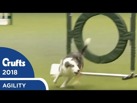Agility - Championship Round 1 (Jumping) Part 1 | Crufts 2018