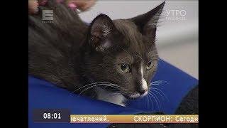Кнопик хочет домой: храбрый котёнок с непростой судьбой
