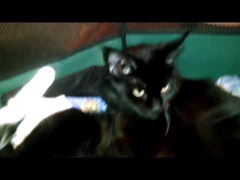 Объявления о продаже кошек и котят в красноярске на avito.