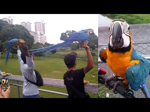 BIG Beautiful Parrots Flying Show | Awesome Parrots