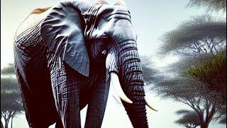 Sri Lanka 2016 4K ultra high definition