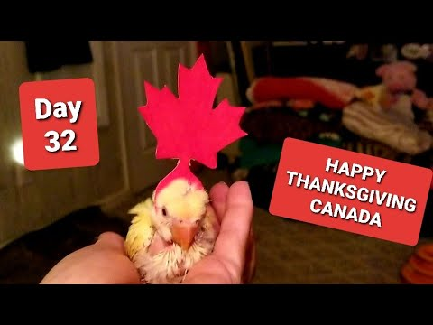 HAPPY THANKSGIVING CANADA 🇨🇦  SWEET DREAMS 💕 DAY 32