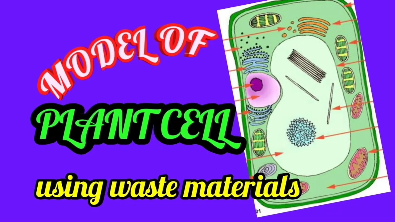 SIMPLE AND EASY WAY TO MAKE A PLANT CELL MODEL| DIY waste ...