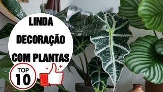 10 Plantas Perfeitas Para seu Apartamento