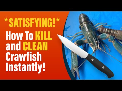How To Kill And Clean Crawfish!