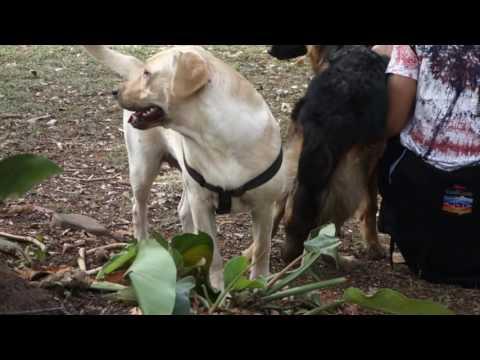 Dog Park at Cubbon Park, Bangalore