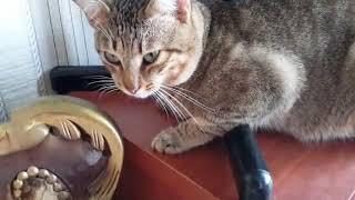 Кот плачет потумучто порвал обои!%