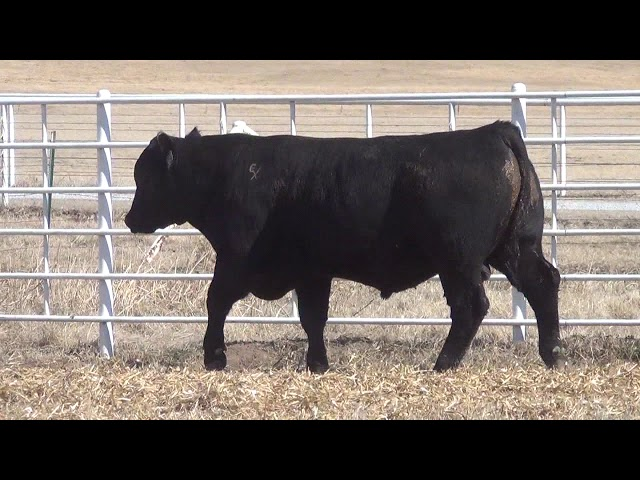 Express Ranches Lot 383