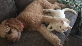 Kitty and Puppy Friends