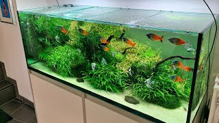 Beautiful German Aquascape and Pond Store - Zoo Flottman - Full Tour