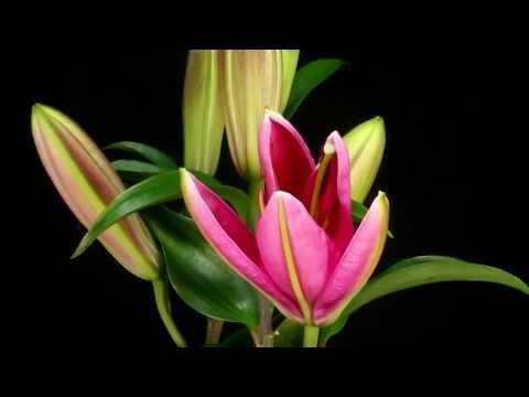 ***Beautiful Flowers***  HD