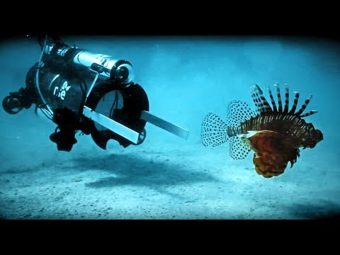 Robots hunt starfish, lionfish to save coral reefs