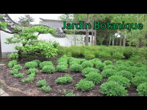 Le jardin Chinois du Jardin Botanique de Montréal