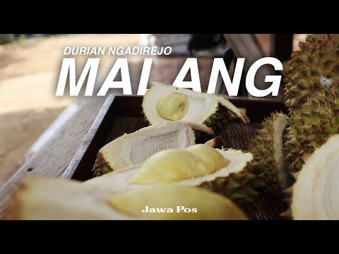 Jawa Pos Belah Durian Episode 11: Durian Ngadirejo Malang