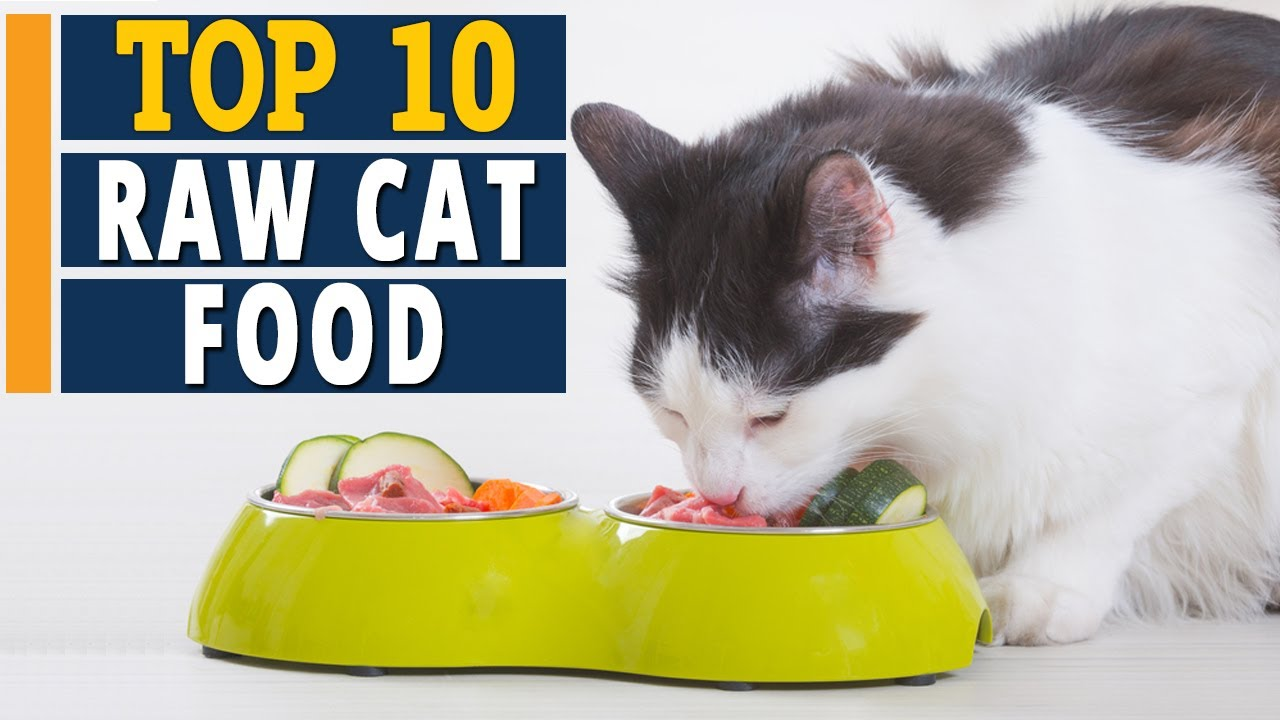 10 Best RAW Cat Foods – (2021 Product Reviews)