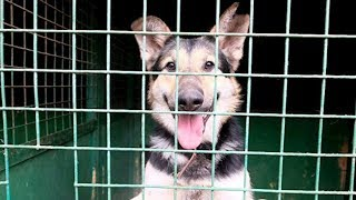 Комиссия не нашла доказательств жестокого убийства собак в Якутске