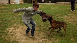 Louis Is Attacked By A 'weaponized' Dog - Louis Theroux's La Stories: Episode 1 Preview - Bbc Two