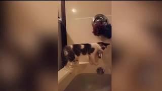 Funny Animals Fails
