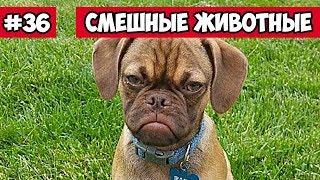 Недовольная собака - смешные животные | Bazuzu Video ТОП подборка август 2017