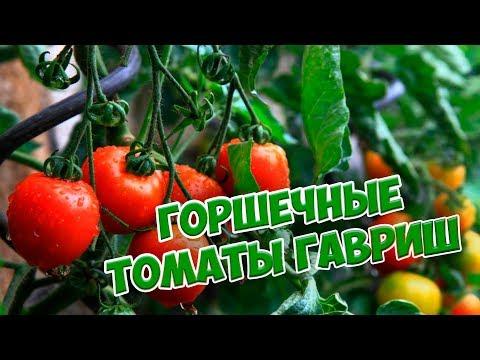 Семена томатов 🌟 Топ 5 сортов горшечных томатов 🌟 Гавриш