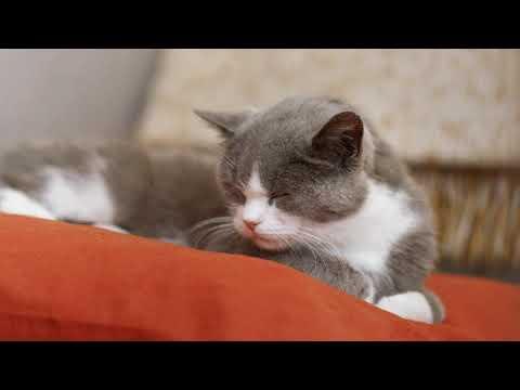 Lenka Nová - Sladká sezóna from YouTube · Duration:  5 minutes 46 seconds